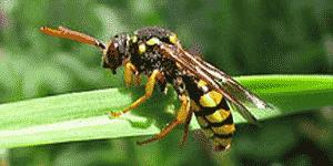 wildbienen kennenlernen wissenschaftsjahr zukunftsprojekt erde. Black Bedroom Furniture Sets. Home Design Ideas