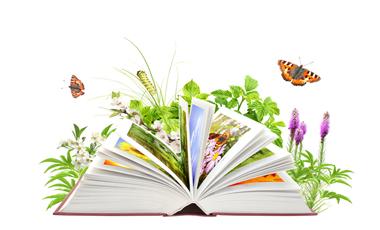 Entrez et tapons la causette (archive 4)... Buch-Schmetterlinge