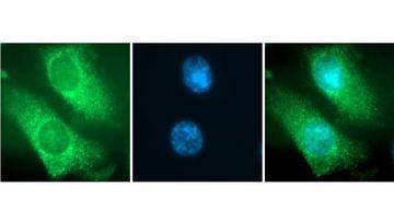 Mikroskopaufnahmen zeigen die Wirkung des Naturstoffs