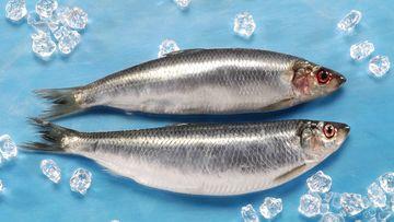 Foto, das zwei Fische zeigt