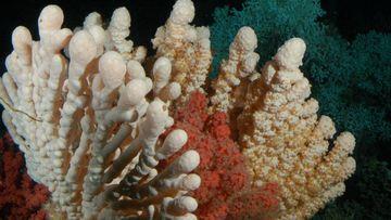 Foto, dass eine Koralle zeigt