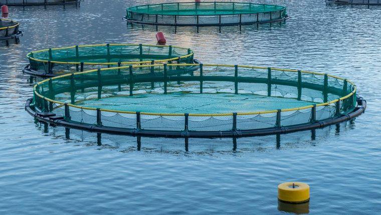 Foto einer Aquakultur im Meer