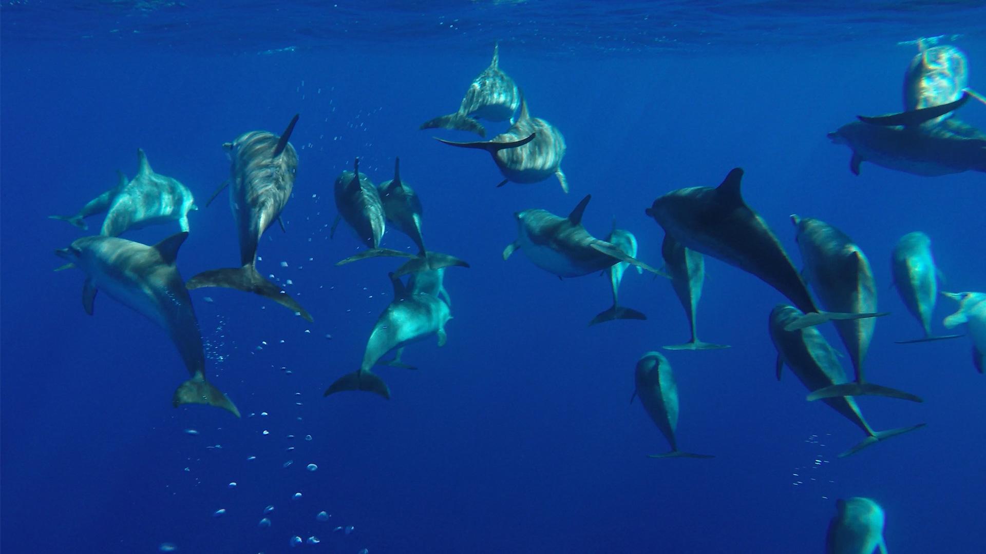 Meeresforscher